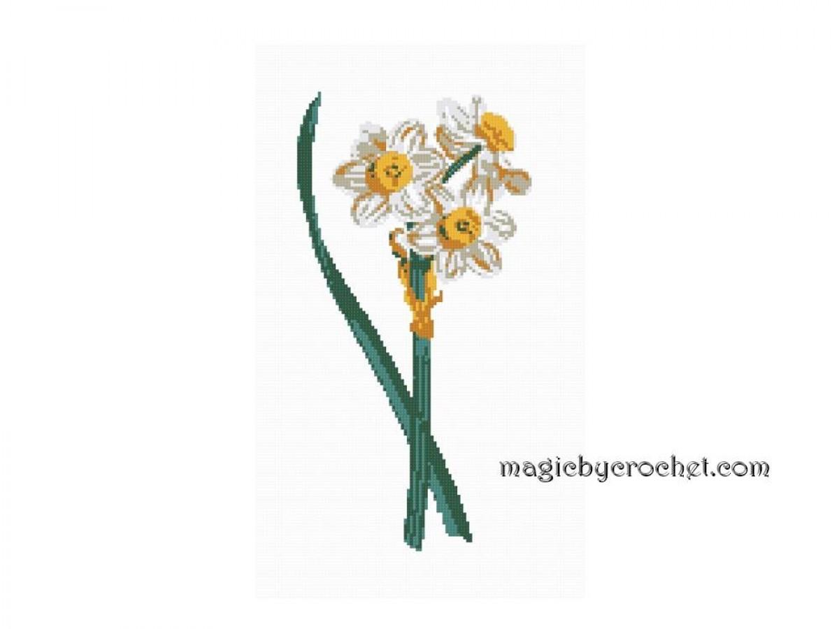 Antique Botanical Plate - Daffodils , Cross Stitch Pattern, PDF counted chart, No.104
